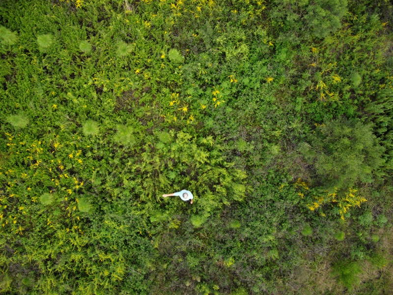 Micro Aerial Projects using small uavs to monitor invasive plant encroachment