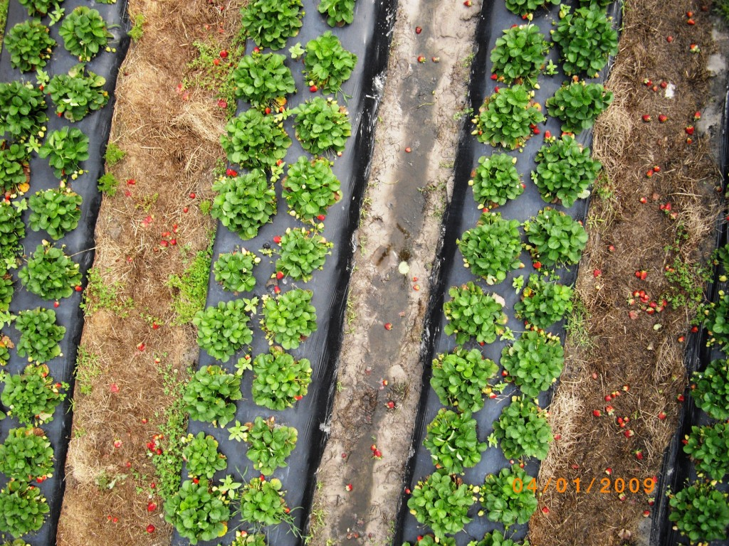 Micro Aerial Projects using a small uav to inspect the health of strawberry plantations